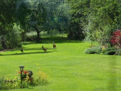 Besucher im Garten